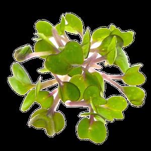 Pinkkaalspirer oekologiske FRISKE SPIRER