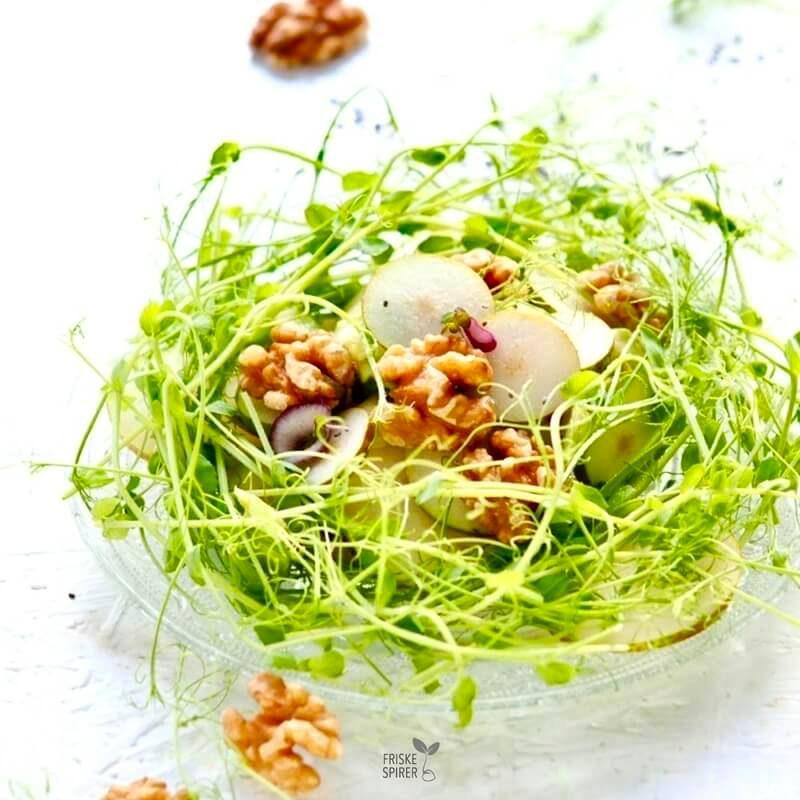 Ærteskud salat med spirer FRISKE SPIRER