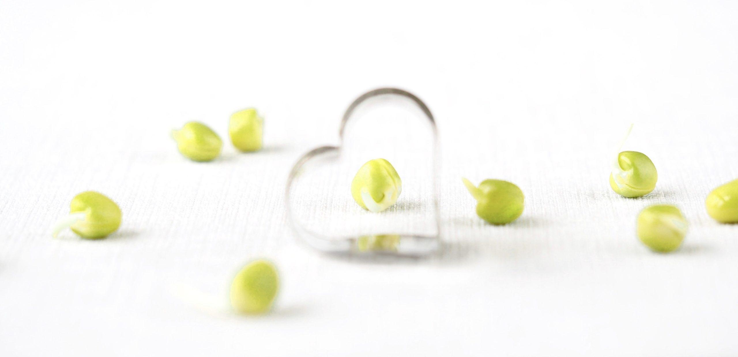 Kvalitetsfrø til spirer og mikrogrønt