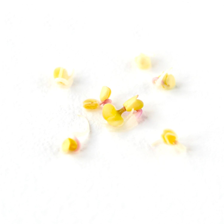Placering af blege eller gule spirer