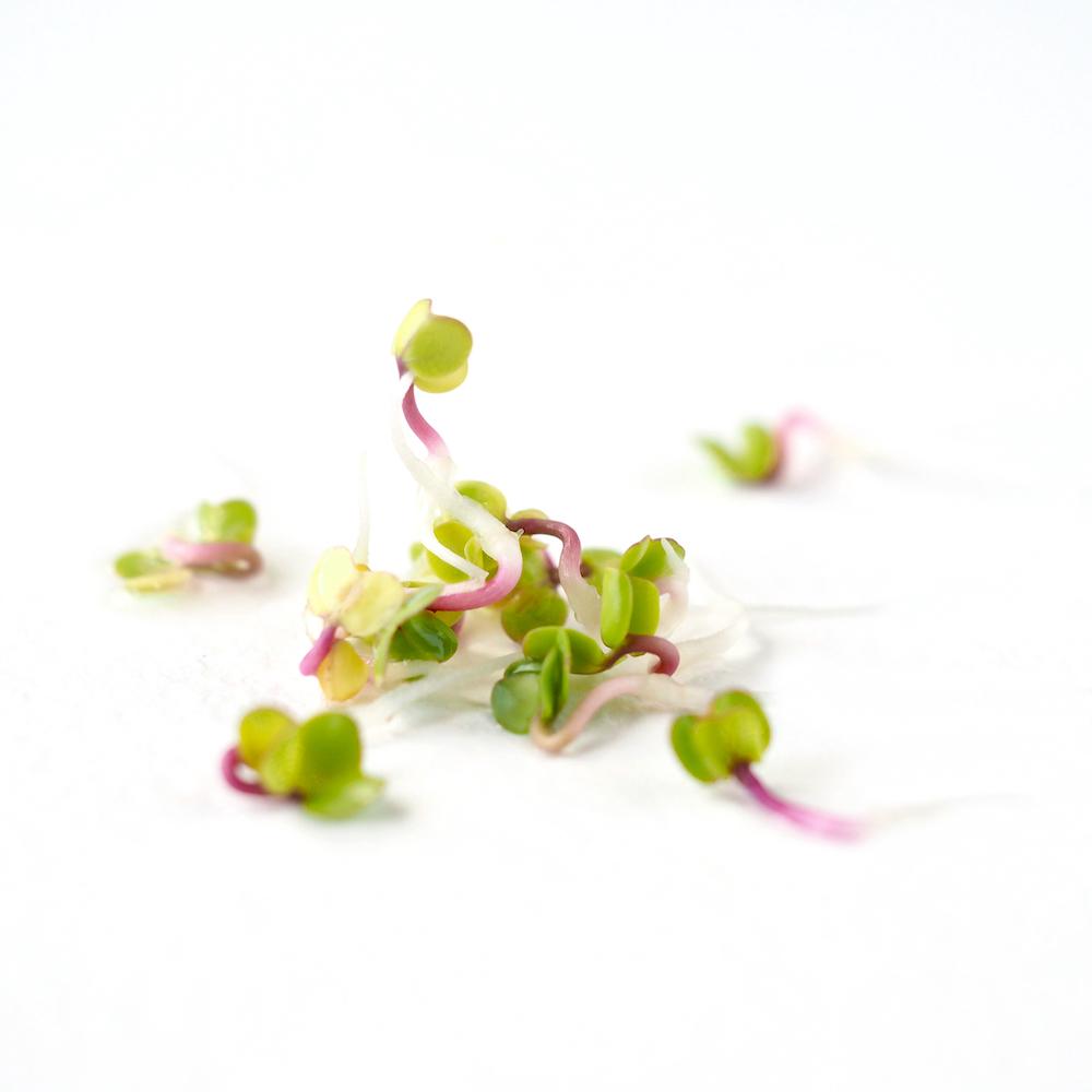 Placering af spirer og mikrogrønt i køkkenet